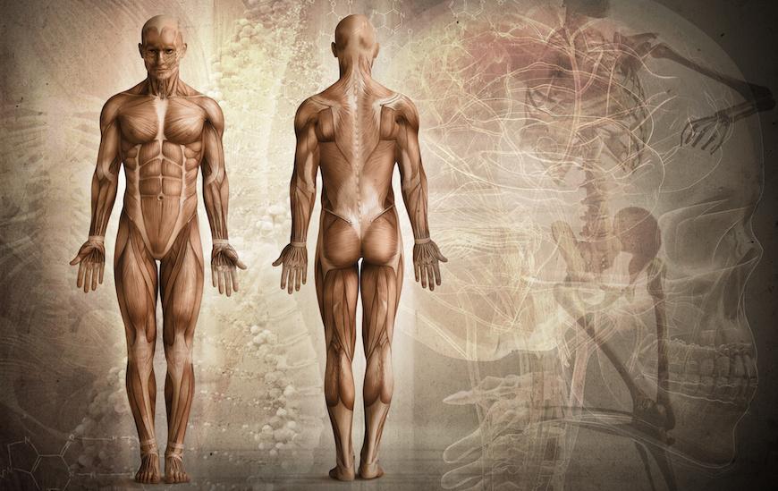 Antropometria i optymalizacja mocy w triathlonie