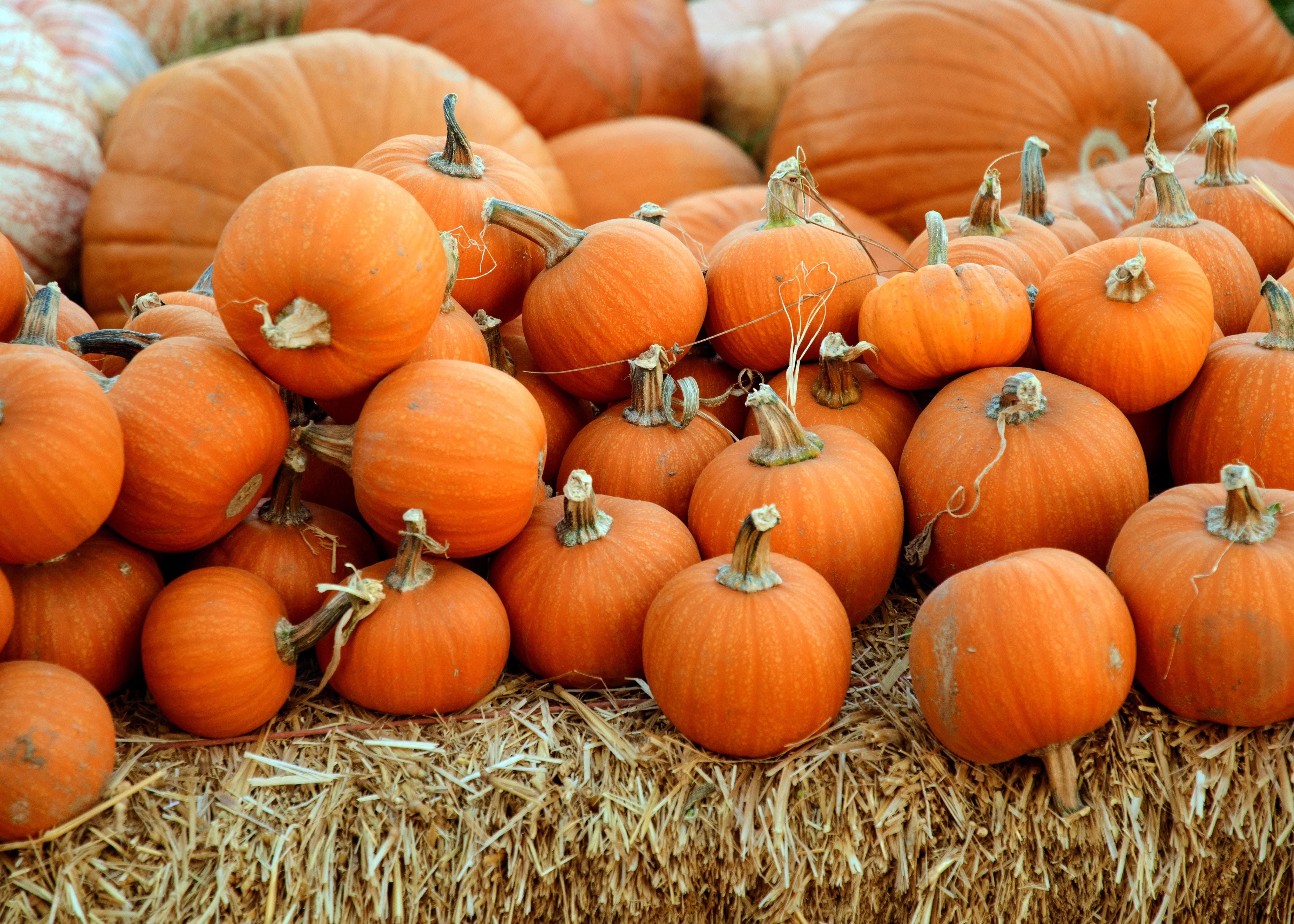 Dieta bogata w dynię, paprykę i marchewkę zmniejsza ryzyko nowotworów przewodu pokarmowego!